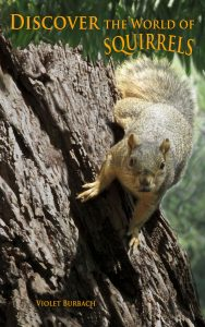 Discover the World of Squirrels