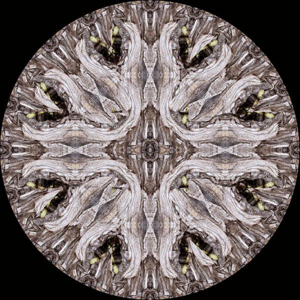 Bark Reflected Priests Kaleidoscope