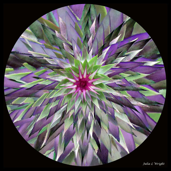 Red Flower with Purple Leaves Kaleidoscope