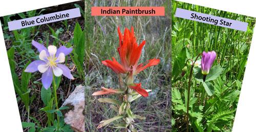 Find Colorado Wildflowers Card Deck